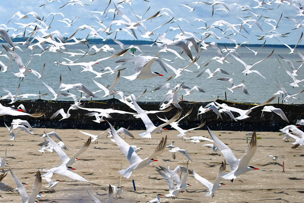photo of birds flying from a sandy shore