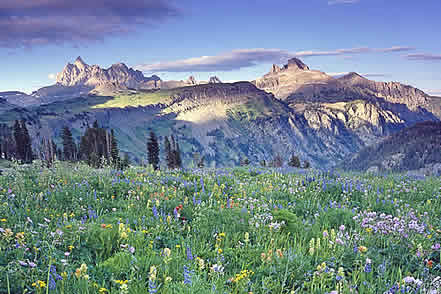 photo of high mountains and a meadow of wildflowers