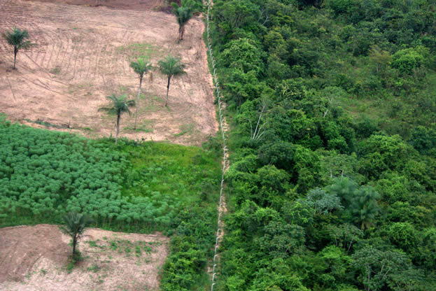 photo of a fence, deep forest cover on one side, empty land on the other
