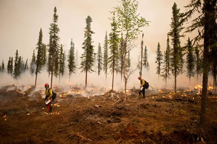 photo of firefighters in a burned landscape