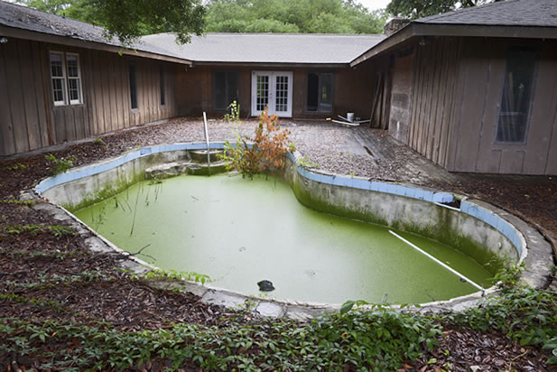 photo of a swimming pool covered in duckweed and algae, reeds growning through; a delapidated building in the background