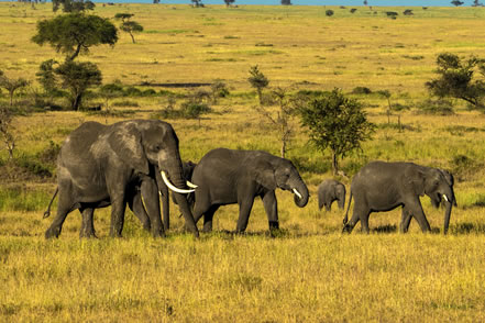 photo of a group of elephants in a grassland
