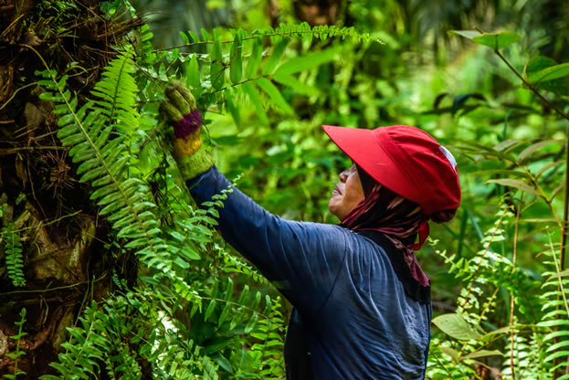 photo of someone working in a tropical forest