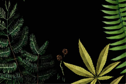 artwork depicting redwood leaves, fern fronds, and a marijuana leaf